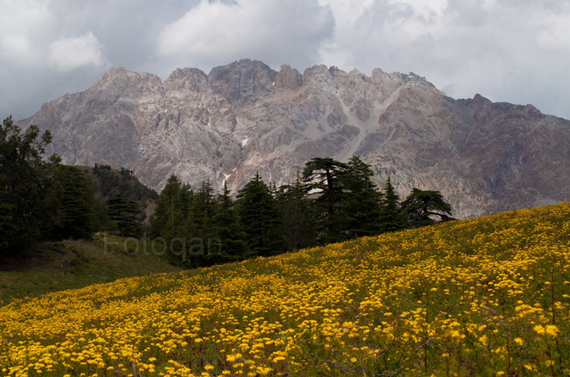 floor and mountains The Real Beauty of Pakistan by Furqan Riaz