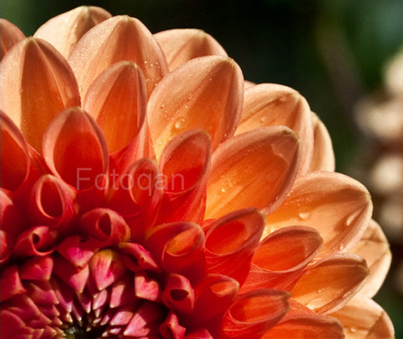 flower closeup The Real Beauty of Pakistan by Furqan Riaz