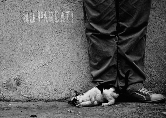 Lazy Cat, Conceptual Photography Ideas