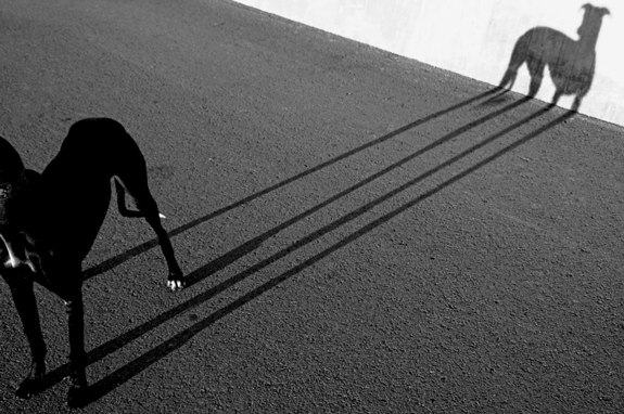 Dog's Shadow