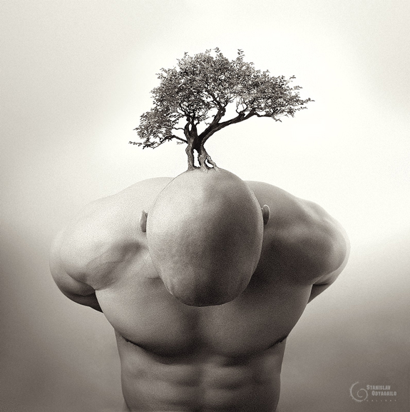 Bonsai - Creative Picture