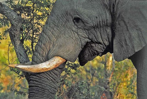 Famous Places - South African Safari - Sabi Sabi