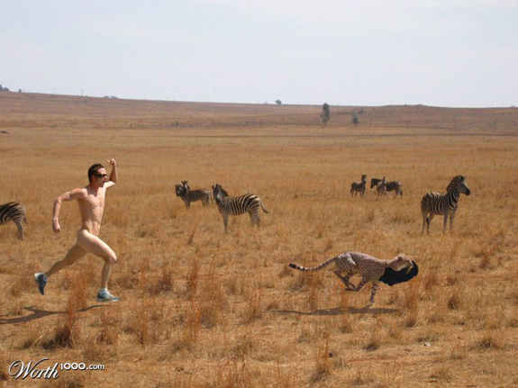 Safari Run - Crazy Pictures